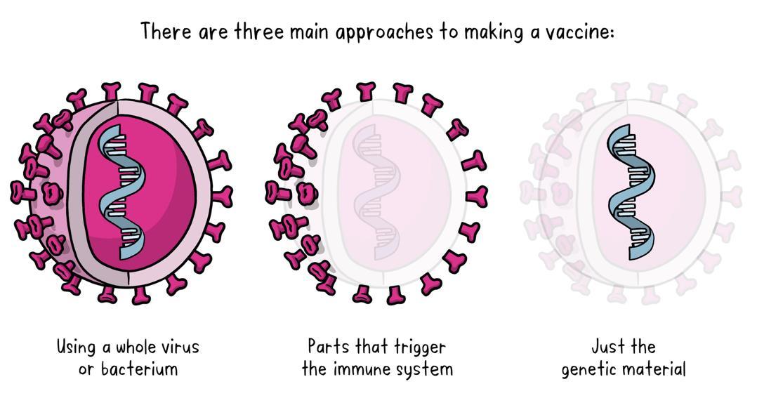 Tìm hiểu các loại vắc xin COVID-19